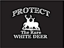White Deer Q&A