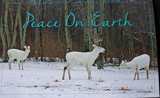 White Deer Xmas Card-2