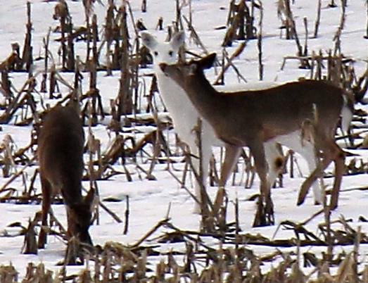 white deer buddhist single women Our topic today is the buddhist perspective on magic and the supernatural  not a single thought can escape  a white lotus miraculously blossomed out.