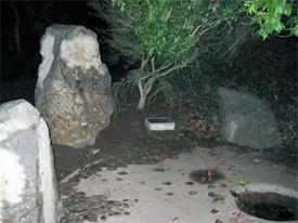 White Deer-Lucy white Deer Memorial